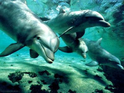 20071027164656-delfines.jpg