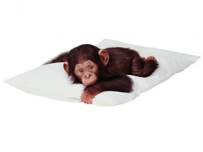 20071101183019-1024x768-bebe-chimpance.jpg