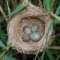 20111030234018-huevo-de-cucu.jpeg