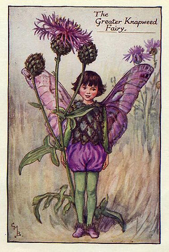 013-greater_knapweed_flower_fairy